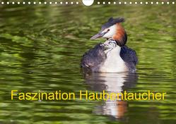 Faszination Haubentaucher (Wandkalender 2021 DIN A4 quer) von Martin,  Wilfried