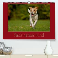Faszination Hund (Premium, hochwertiger DIN A2 Wandkalender 2020, Kunstdruck in Hochglanz) von Bischof,  Melanie, Bischof,  Tierfotografie