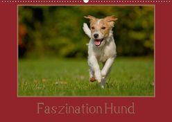 Faszination Hund (Wandkalender 2019 DIN A2 quer) von Bischof,  Melanie, Bischof,  Tierfotografie
