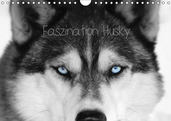 Faszination Husky (Wandkalender 2019 DIN A4 quer) von Snow Wolf Valley,  of