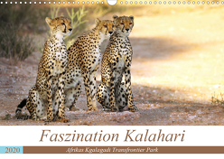 Faszination Kalahari (Wandkalender 2020 DIN A3 quer) von Woyke,  Wibke