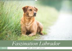 Faszination Labrador – gelb, foxred, schwarz (Wandkalender 2019 DIN A2 quer) von Strunz,  Cornelia