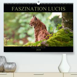 Faszination Luchs (Premium, hochwertiger DIN A2 Wandkalender 2020, Kunstdruck in Hochglanz) von www.chphotography.de
