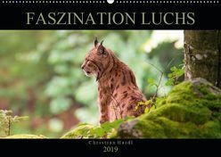 Faszination Luchs (Wandkalender 2019 DIN A2 quer)