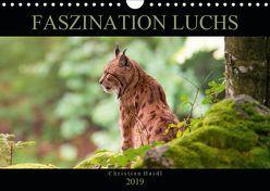 Faszination Luchs (Wandkalender 2019 DIN A4 quer)