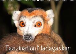 Faszination Madagaskar (Wandkalender 2019 DIN A2 quer) von Raab,  Karsten-Thilo