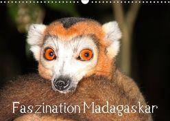 Faszination Madagaskar (Wandkalender 2019 DIN A3 quer) von Raab,  Karsten-Thilo