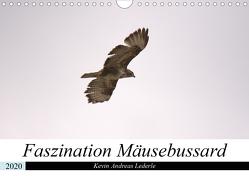 Faszination Mäusebussard (Wandkalender 2020 DIN A4 quer) von Andreas Lederle,  Kevin