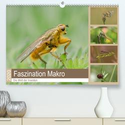 Faszination Makro – Die Welt der Insekten (Premium, hochwertiger DIN A2 Wandkalender 2020, Kunstdruck in Hochglanz) von Potratz,  Andrea