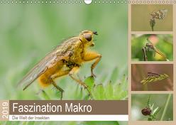 Faszination Makro – Die Welt der Insekten (Wandkalender 2019 DIN A3 quer) von Potratz,  Andrea