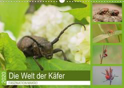 Faszination Makro – Die Welt der Käfer (Wandkalender 2020 DIN A3 quer) von Potratz,  Andrea