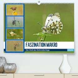 Faszination Makro – Die Welt der Schmetterlinge (Premium, hochwertiger DIN A2 Wandkalender 2020, Kunstdruck in Hochglanz) von Potratz,  Andrea