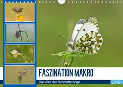 Faszination Makro – Die Welt der Schmetterlinge (Wandkalender 2019 DIN A4 quer) von Potratz,  Andrea