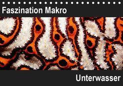 Faszination Makro UnterwasserCH-Version (Tischkalender 2019 DIN A5 quer) von Bucher,  Markus