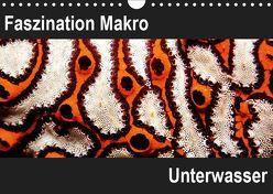 Faszination Makro UnterwasserCH-Version (Wandkalender 2019 DIN A4 quer) von Bucher,  Markus