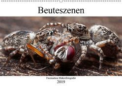 Faszination Makrofotografie: Beuteszenen (Wandkalender 2019 DIN A2 quer) von Mett Photography,  Alexander