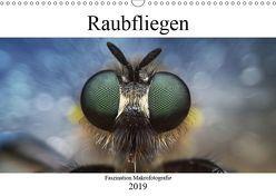 Faszination Makrofotografie: Raubfliegen (Wandkalender 2019 DIN A3 quer) von Mett Photography,  Alexander
