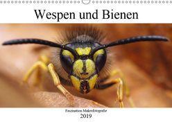 Faszination Makrofotografie: Wespen und Bienen (Wandkalender 2019 DIN A3 quer) von Mett Photography,  Alexander