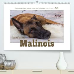 Faszination Malinois (Premium, hochwertiger DIN A2 Wandkalender 2020, Kunstdruck in Hochglanz) von Wrede,  Martina