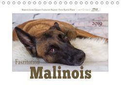 Faszination Malinois (Tischkalender 2019 DIN A5 quer) von Wrede,  Martina