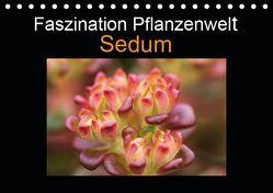 Faszination Pflanzenwelt – Sedum (Tischkalender 2019 DIN A5 quer) von Rix,  Veronika
