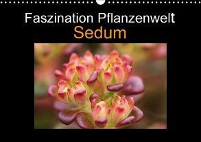 Faszination Pflanzenwelt – Sedum (Wandkalender 2018 DIN A3 quer) von Rix,  Veronika