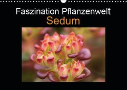 Faszination Pflanzenwelt – Sedum (Wandkalender 2019 DIN A3 quer) von Rix,  Veronika