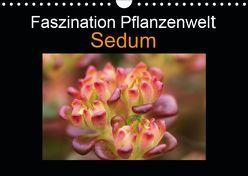 Faszination Pflanzenwelt – Sedum (Wandkalender 2019 DIN A4 quer) von Rix,  Veronika