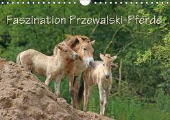 Faszination Przewalski-Pferde (Wandkalender 2018 DIN A4 quer) von Lindert-Rottke,  Antje