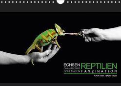 Faszination Reptilien (Wandkalender 2019 DIN A4 quer) von Photo - Jakob Stute,  Stute