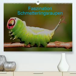 Faszination Schmetterlingsraupen (Premium, hochwertiger DIN A2 Wandkalender 2020, Kunstdruck in Hochglanz) von Erlwein,  Winfried