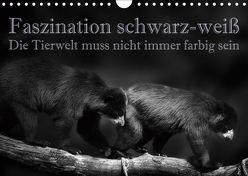 Faszination schwarz-weiß – Die Tierwelt muss nicht immer farbig sein (Wandkalender 2019 DIN A4 quer) von Swierczyna,  Eleonore