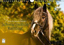Faszination Schwarzwälder Kaltblut (Wandkalender 2019 DIN A4 quer) von HomSi-Fotos