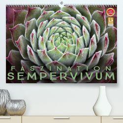 Faszination Sempervivum (Premium, hochwertiger DIN A2 Wandkalender 2020, Kunstdruck in Hochglanz) von Cross,  Martina