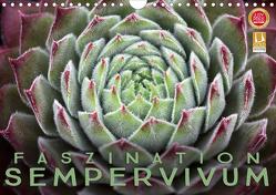 Faszination Sempervivum (Wandkalender 2021 DIN A4 quer) von Cross,  Martina