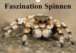 Faszination Spinnen (Wandkalender 2018 DIN A4 quer) von Stanzer,  Elisabeth