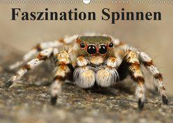 Faszination Spinnen (Wandkalender 2019 DIN A3 quer) von Stanzer,  Elisabeth