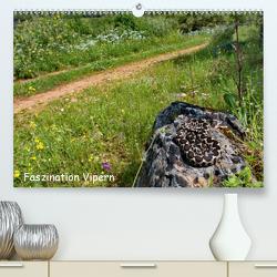 Faszination Vipern (Premium, hochwertiger DIN A2 Wandkalender 2021, Kunstdruck in Hochglanz) von Dummermuth,  Stefan