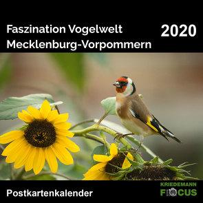 Faszination Vogelwelt – Mecklenburg-Vorpommern 2020 von Kriedemann,  Karsten