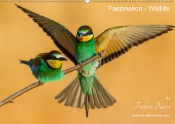 Faszination – Wildlife (Wandkalender 2019 DIN A2 quer) von Bauer,  Frederic