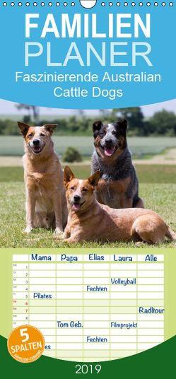 Faszinierende Australian Cattle Dogs – Familienplaner hoch (Wandkalender 2019 , 21 cm x 45 cm, hoch) von Verena Scholze,  Fotodesign