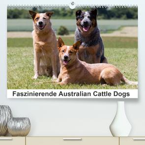 Faszinierende Australian Cattle Dogs (Premium, hochwertiger DIN A2 Wandkalender 2021, Kunstdruck in Hochglanz) von Verena Scholze,  Fotodesign