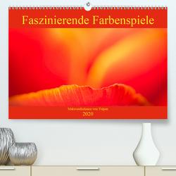 Faszinierende Farbenspiele – Makroaufnahmen von Tulpen (Premium, hochwertiger DIN A2 Wandkalender 2020, Kunstdruck in Hochglanz) von Scheurer,  Monika