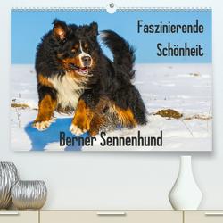 Faszinierende Schönheit Berner Sennenhund (Premium, hochwertiger DIN A2 Wandkalender 2020, Kunstdruck in Hochglanz) von Starick,  Sigrid
