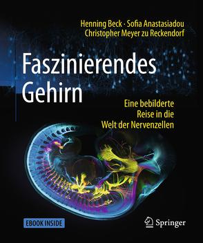 Faszinierendes Gehirn von Anastasiadou,  Sofia, Beck,  Henning, Meyer zu Reckendorf,  Christopher