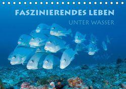 Faszinierendes Leben unter Wasser (Tischkalender 2019 DIN A5 quer) von Peyer,  Stephan