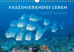 Faszinierendes Leben unter Wasser (Wandkalender 2019 DIN A4 quer) von Peyer,  Stephan