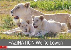 FAZINATION Weiße Löwen (Wandkalender 2019 DIN A3 quer) von Thula