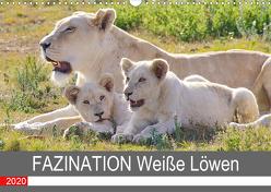 FAZINATION Weiße Löwen (Wandkalender 2020 DIN A3 quer) von Thula