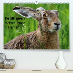 Feldhasen – Meister Lampe in Franken (Premium, hochwertiger DIN A2 Wandkalender 2021, Kunstdruck in Hochglanz) von Bachmeier,  Günter